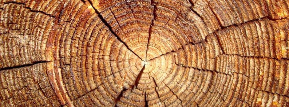 sfondo-essiccazione-legno-homepage
